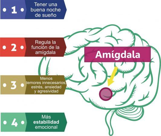 Dormir bien influye sobre la amígdala y reduce la tensión. Por Recharge Energy. CC BY-SA 4.0