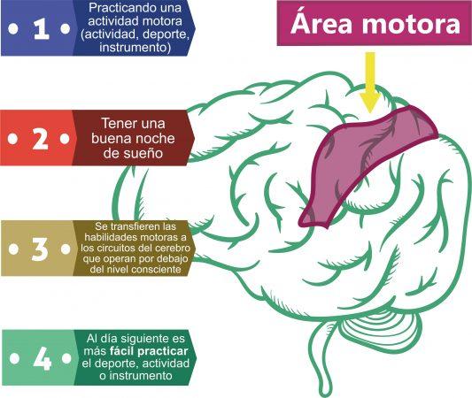 Dormir bien mejora las habilidades motoras que se practican. Por Recharge Energy. CC BY-SA 4.0