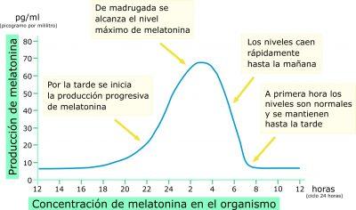 Producción de Melatonina en el organismo durante un ciclo de 24 horas