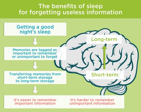 The benefits of sleep for forgetting useless information. By Recharge Energy. CC BY-SA 4.0