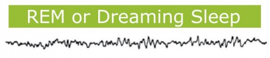 Sleep phases: REM phase - Dreaming while you sleep. By Recharge Energy. CC BY-SA 4.0